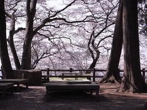 太平山謙信平の座敷席と桜