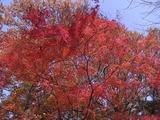 休憩所の紅葉1