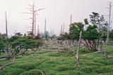 立ち枯れの森大台ケ原22