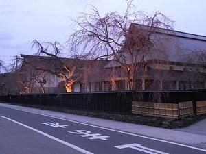 角館伝承館のしだれ桜ライトアップもまだ咲いていない状態を右から