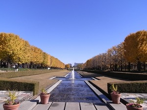 昭和記念公園整然と並ぶ立川口のイチョウ並木01