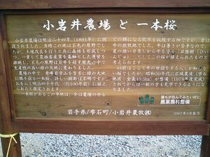 小岩井農場一本桜の解説看板