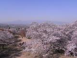 大法師公園からの眺め1
