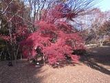 かえで園の紅葉2
