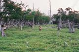 立ち枯れの森大台ケ原27