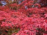 休憩所の紅葉2