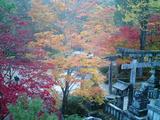 紅葉の古峰神社03
