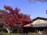 日本庭園の紅葉1