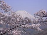 大法師公園から富士山を望む4