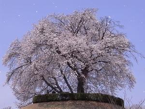 つがの里桜を離れて見る