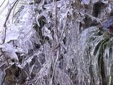 氷を纏った枝
