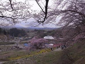 三春滝桜を撮ってる人たち6