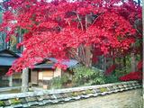 紅葉の古峰神社13