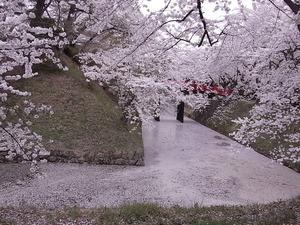 弘前城下乗橋とお堀を埋め尽くす桜の花びら