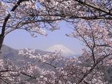 大法師公園から富士山を望む1