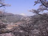 大法師公園から富士山を望む3