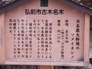 弘前城日本一太いソメイヨシノの案内看板