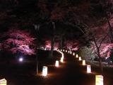 灯籠で照らされる散策路1