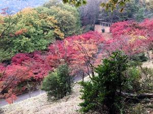 さらに上からもみじ谷の紅葉を望む