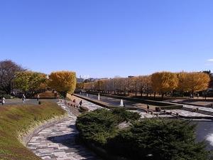 昭和記念公園立川口のイチョウ並木の遠景02