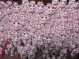 奉納された招き猫たち1