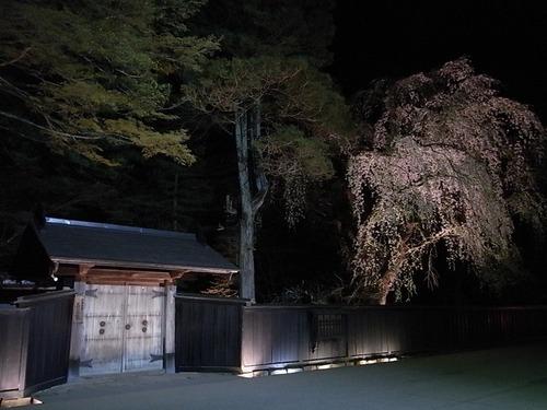 角館武家屋敷夜の枝垂れ桜ライトアップ