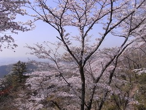 太平山謙信平からの眺めと桜1