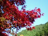 大芦渓谷の紅葉10