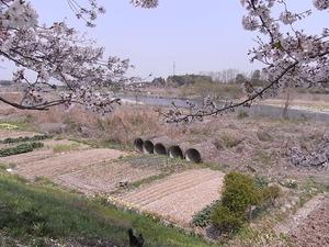 思川河川敷の土管