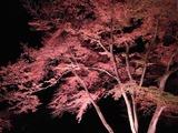 長瀞紅葉ライトアップ15