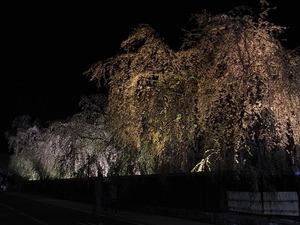 角館武家屋敷 角館樺細工伝承館 ライトアップされた枝垂れ桜たち