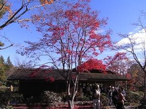 昭和記念公園の茶室風の建物と紅葉01