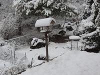 雪の朝(2)