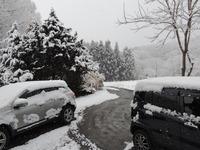 雪の朝(1)