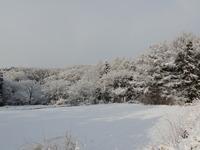 3月1日の雪