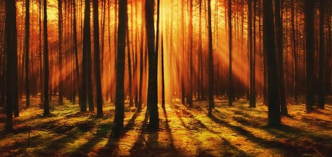 forest-4412721__340