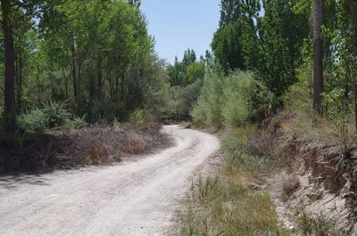 ゼミ渓谷の道