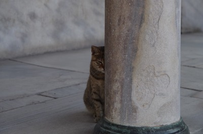 トプカプ宮殿猫