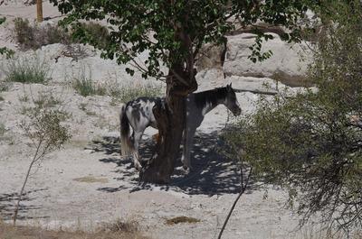 カッパドキア馬