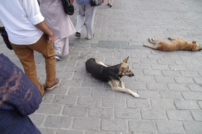 イスタンブール犬2