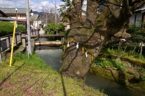 水門と巨木