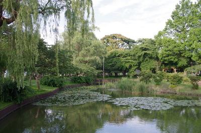 合浦公園の池