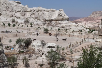 カッパドキア牧場