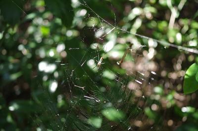 女郎蜘蛛夫婦