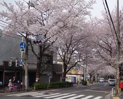 禿坂の桜(1280×1024)