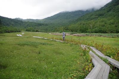 栂池自然園の湿地