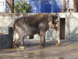 象のはな子さん(1024x768)