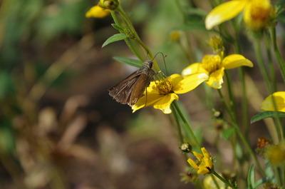 蛾だか蝶だか