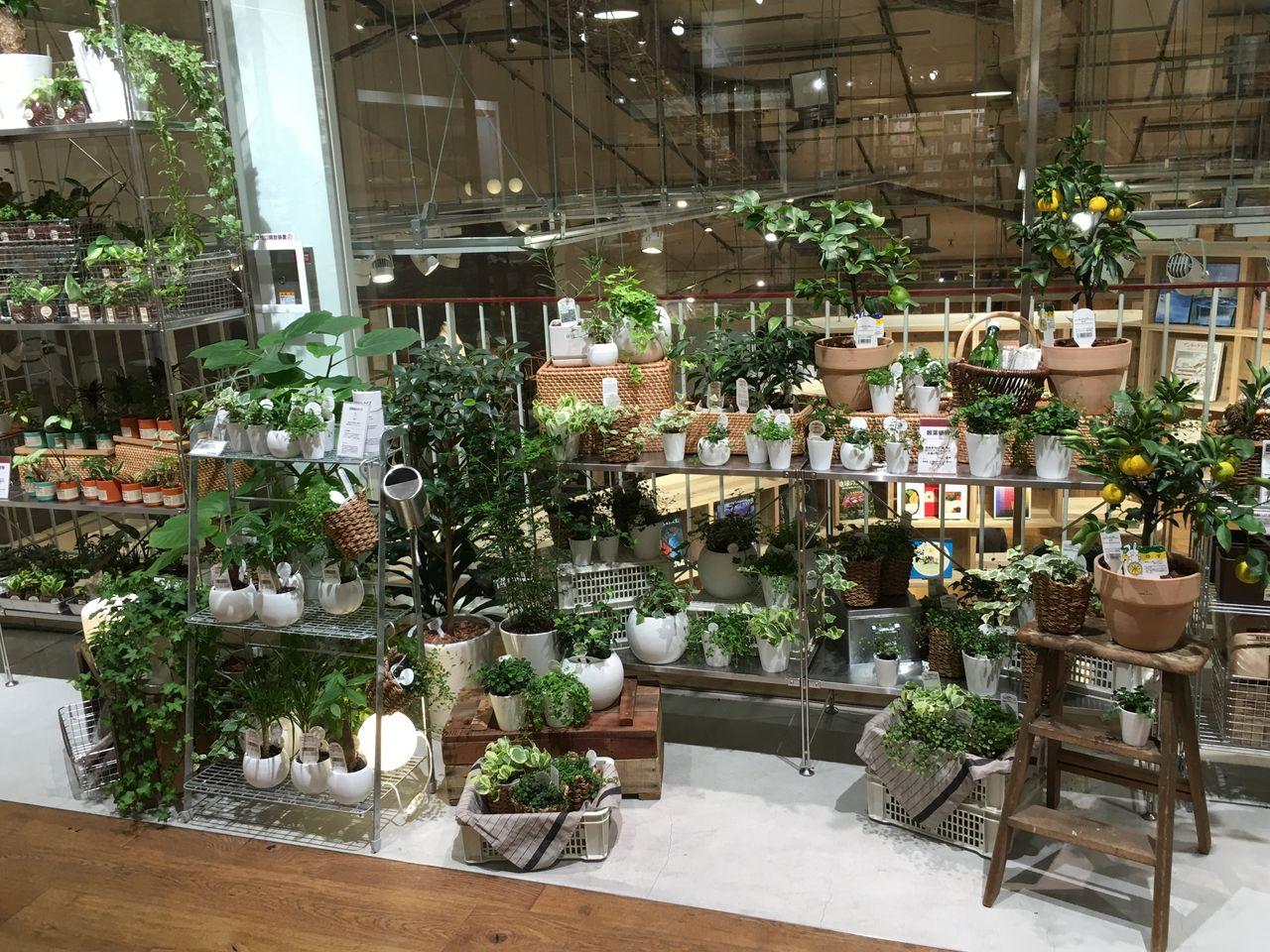 postさんの、部屋全体,観葉植物,無印良品,照明,雑貨