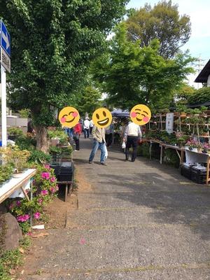 大盆栽まつりと世界盆栽大会!